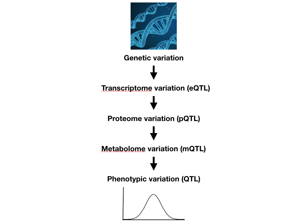 Natural variation in intermediate traits: Gene expression, metabolites, and protein expression